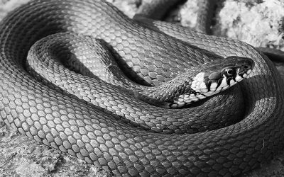 Snakes as an Indoor Air Quality Issue: iSi's Memorable Projects